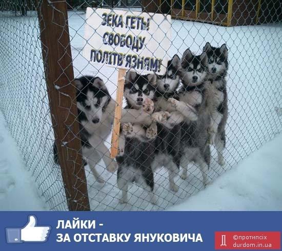 ПР определилась со всеми требованиями к законопроекту по лечению Тимошенко - Цензор.НЕТ 2869