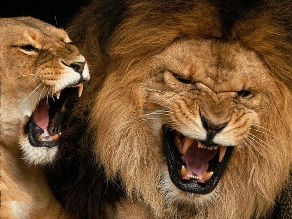 Lion of Judah Jewelry Jewish Jewelry  Judaica Web Store