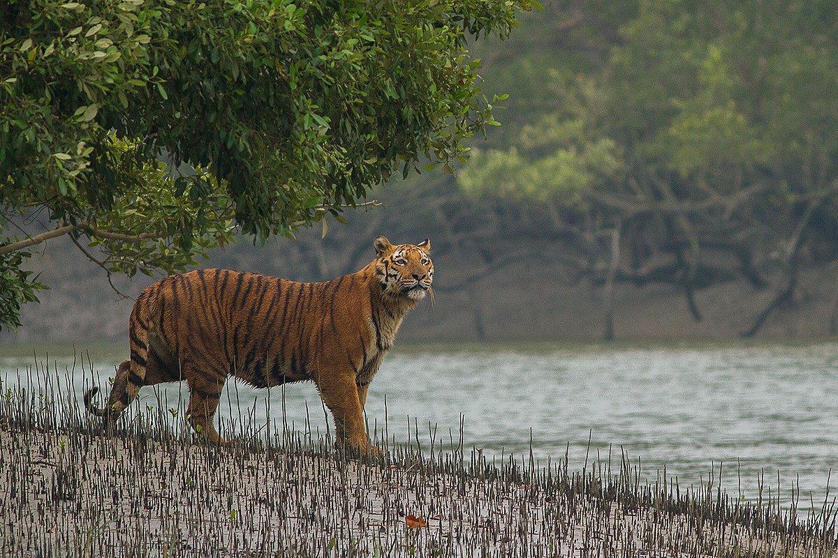 Фото: Soumyajit Nandy