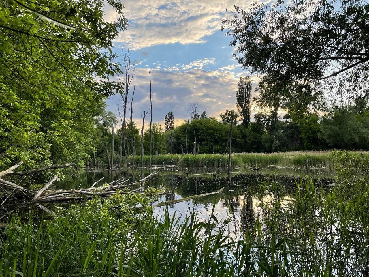 Совські ставки. Фото з презентації, яку створили місцеві жителі, щоб представити своє бачення розвитку цієї території